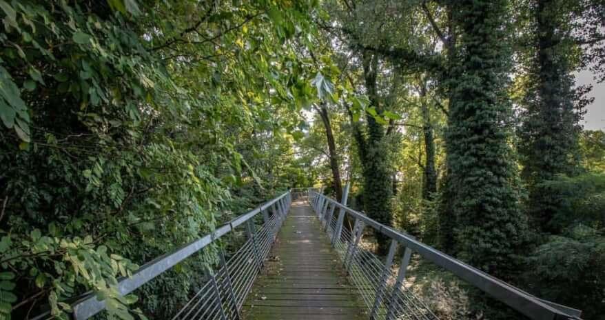bosco lusignolo